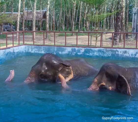 The salt water pool built for the older aging elephants.