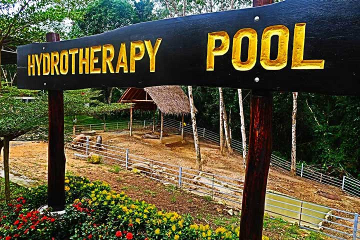 Hydrotherapy pool sign from Ph uket Elephant Sanctuary, with a view of the pigs and chickens in the background.