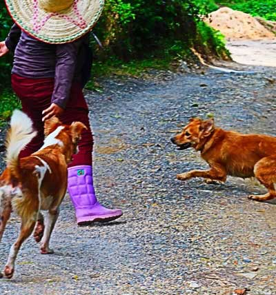 Dogs and our guide at Phuket elephant sanctuary. They accompany you on the tour.
