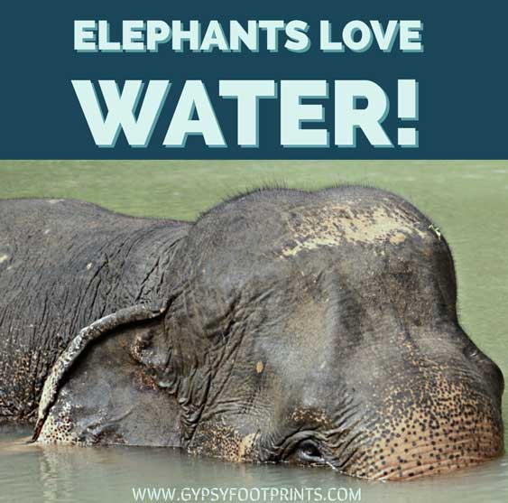 "Elephant in the water, with words that say; ""Elephants Love Water."""