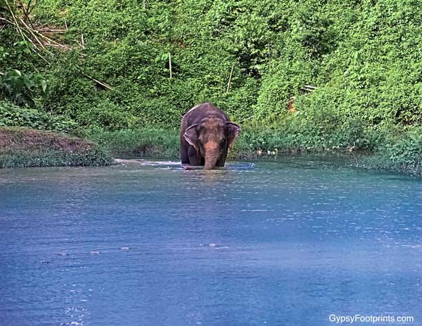An elephant walking into the water from a distance, with greenery in the background.